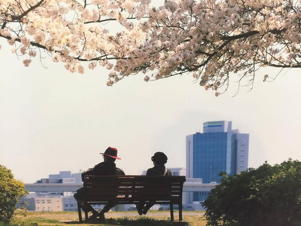 江戸川の桜1